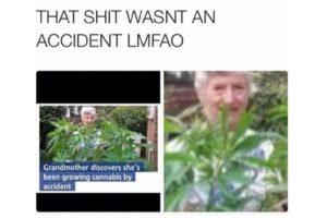 Old lady growing weed meme